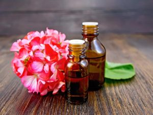 geraniums Oil